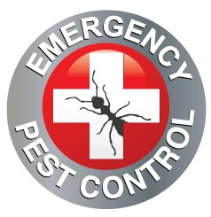 Emergency Pest Control of White Plains