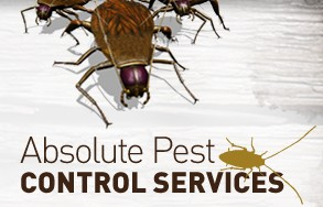 Absolute Pest Control Services