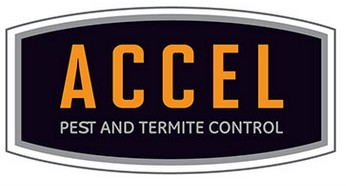 Accel Services