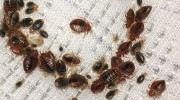 Bed Bugs Removal Exterminator West Palm Beach