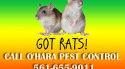 Rodents and Rats Pest Control