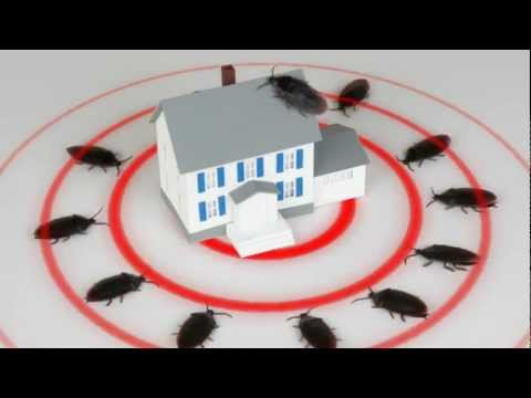 Fort Worth Pest Control & Keller Pest Control