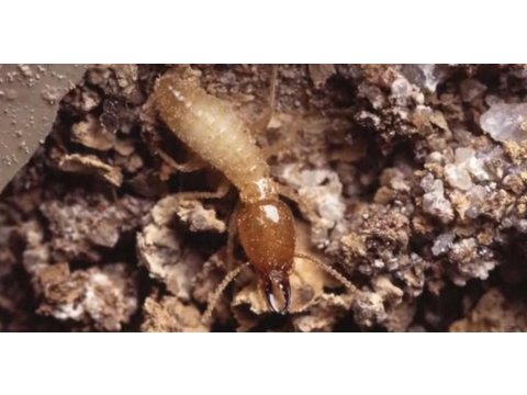 Pest Control: How to Identify Termites