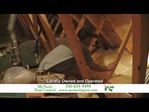 Termite and Pest Protection from McNeely Pest Control