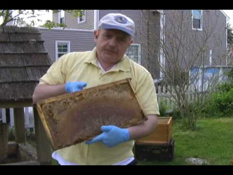 Beemaster's Installing honeybees Method