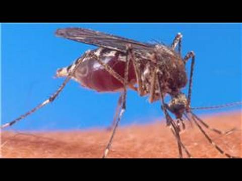 What Are Some Mosquito Habitats?