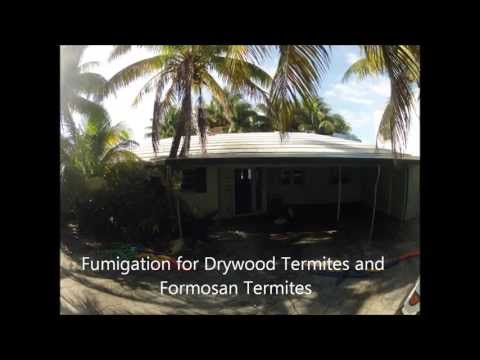 Fumigation for Termites - time lapse video