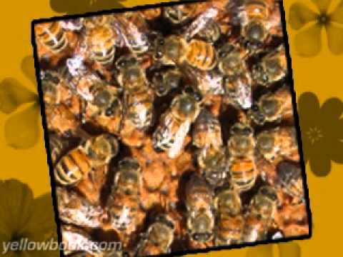 The Beekeeper Total Bee Control Inc